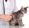 Ветеринарные клиники в Спасском